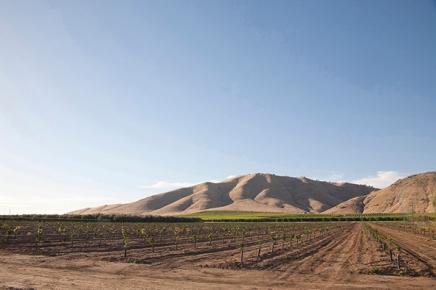 Vineyard in Visalia. Photo by Misaki Matsui.